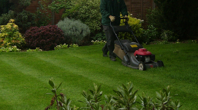 DGS Landscapes | Garden Maintenance & Landscaping Services | Grass ...